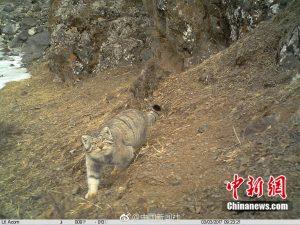 wildlife spy camera