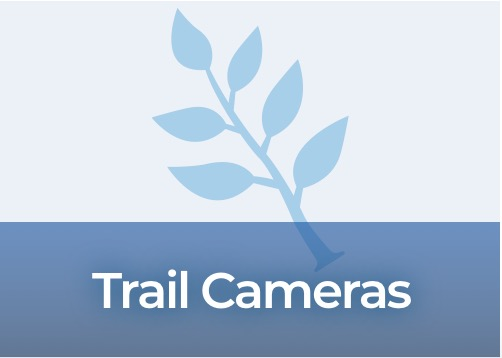 Trail Cameras Products