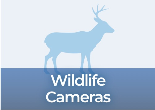 Wildlife Cameras Products