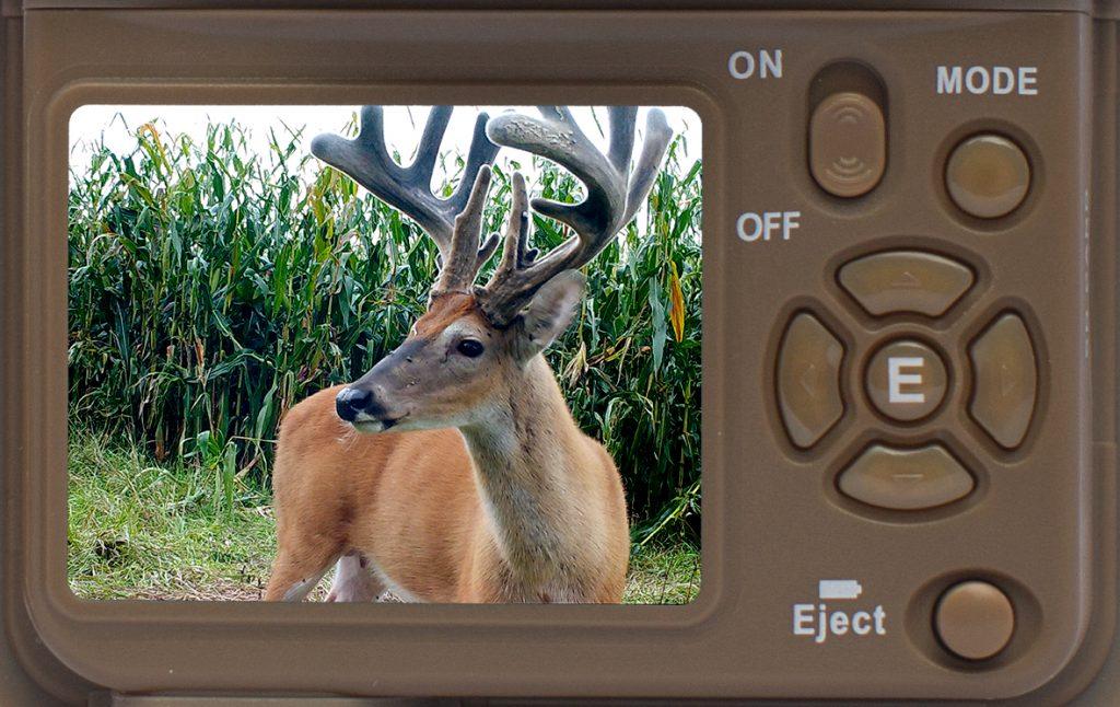 Wildlife Camera controls and screen