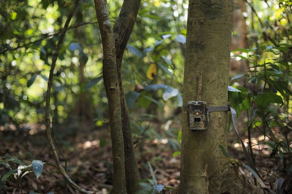 Wildlife Cameras at Pakatak